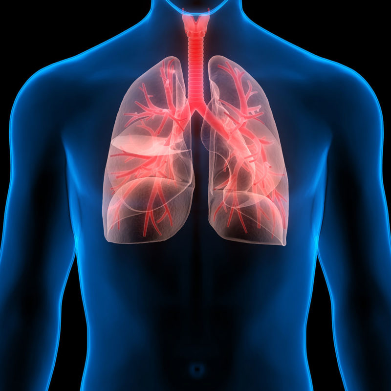 lungs-healthy